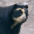 <旅メモ>2/16:大阪(2)・・・通天閣~新世界~天王寺動物園