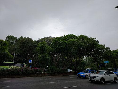 日本人会の通りを挟んで向かいは森