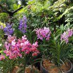 ボタニック・ガーデンのナショナル・オーキッドガーデン