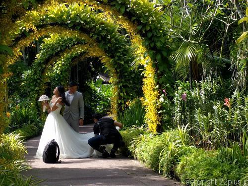 ボタニック・ガーデンで結婚式の前撮りしてた