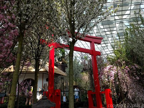 ガーデンズ・バイ・ザ・ベイの桜