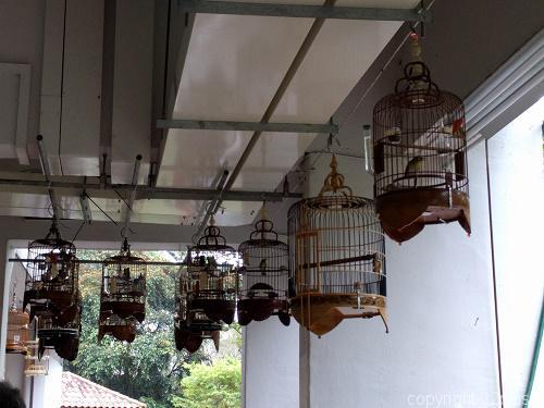 HDBの通路天井につり下げられた鳥かご