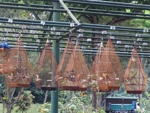 広場の鉄柵につり下げられた鳥かご