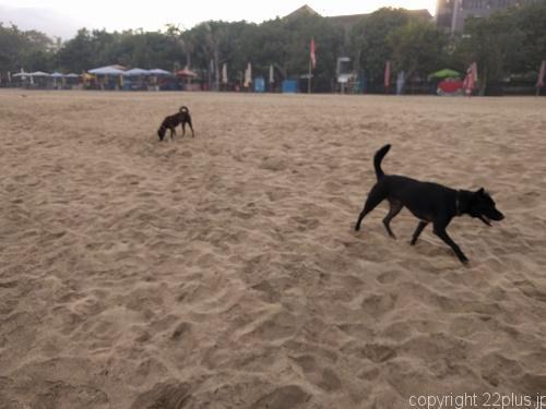 ビーチは犬が放し飼い