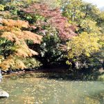 三四郎池の紅葉