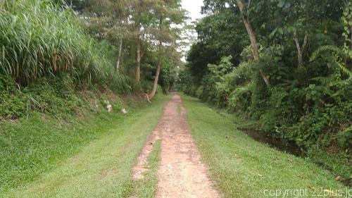 マレー鉄道線路跡の遊歩道